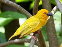 lake hartwell birding