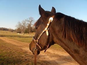 horseback riding trails