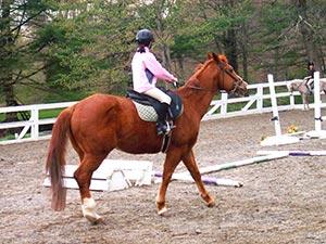 lake hartwell horseback trails